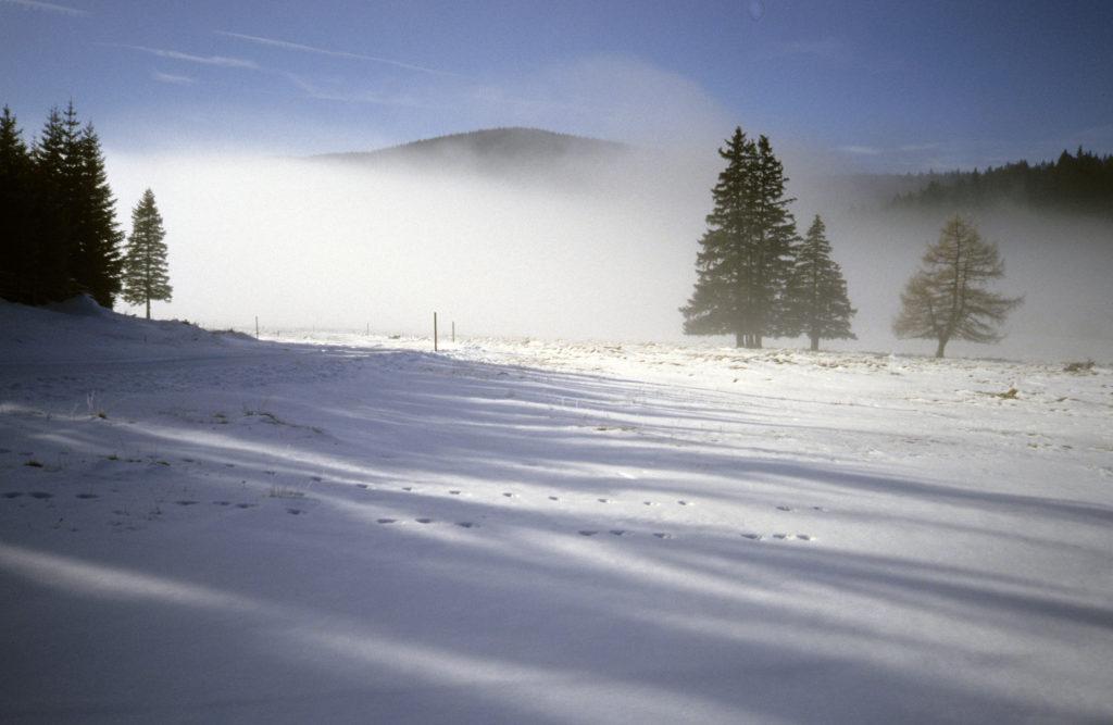 Die winterliche Bodenwiese